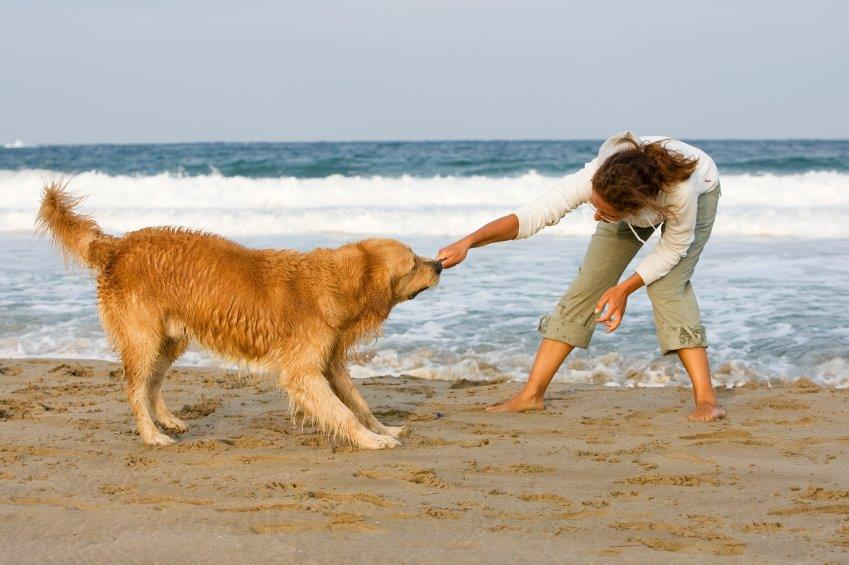 summer dog-friendly beaches