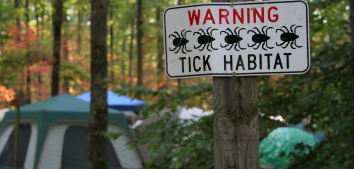 Ticks Infect Dogs and People with a Cocktail, Including Lyme