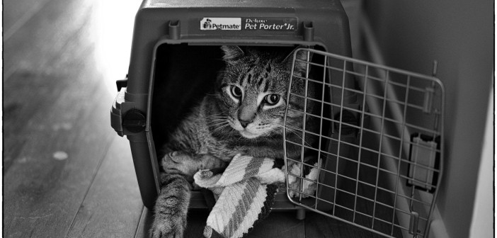 American Humane Association: Pet Safety in a Disaster