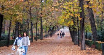 Dog Walk in Autumn