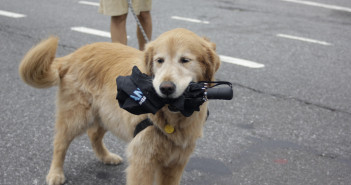 umbrella dog hurricane disaster preparedness