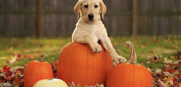 Top Halloween Tips for Pet Owners