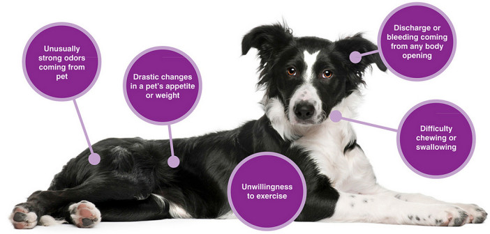 Ten Warning Signs of Cancer in Pets