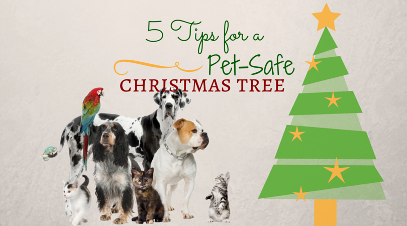 5 tips for a pet safe christmas tree