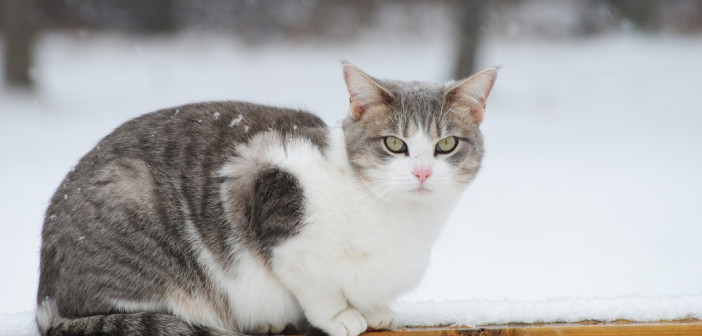 Cold Weather Risks to Pets