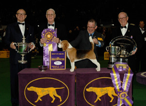 Photo from Westminster Kennel Club site