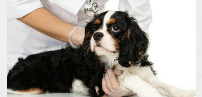 AVMA: Anti-vaccination Movement a Risk to Pet Health