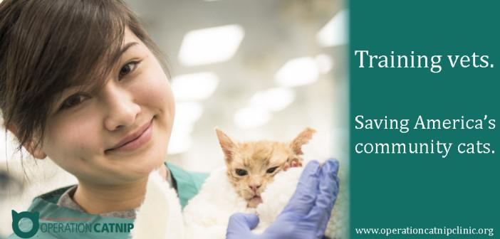Operation Catnip: Gainsville Vet Develops Program to Save America's Cats Nationwide