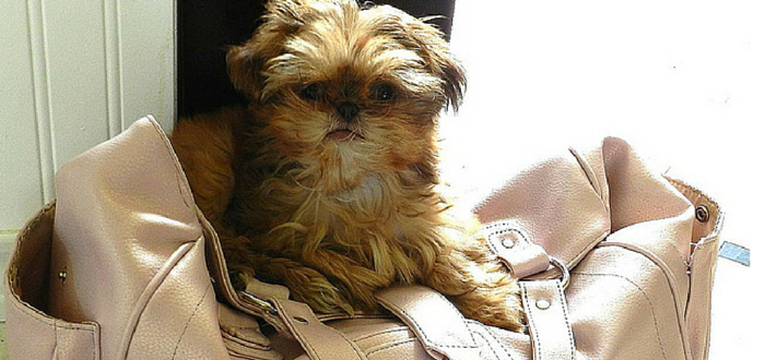 5 Pet Poisons Hiding in Your Purse, Backpack or Work Bag
