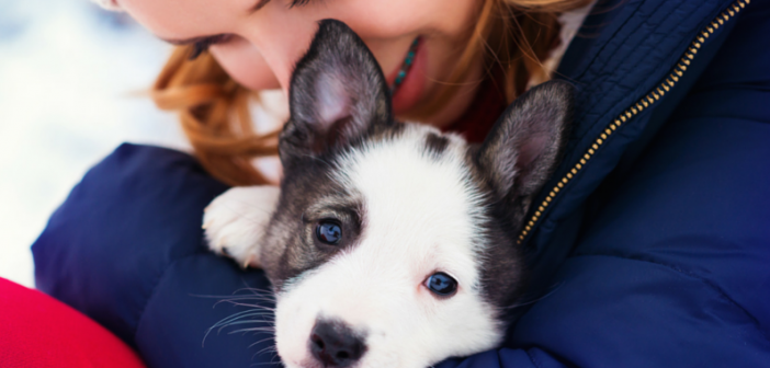 New Survey Reveals 97% of Doctors Believe There Are Health Benefits to Owning a Pet
