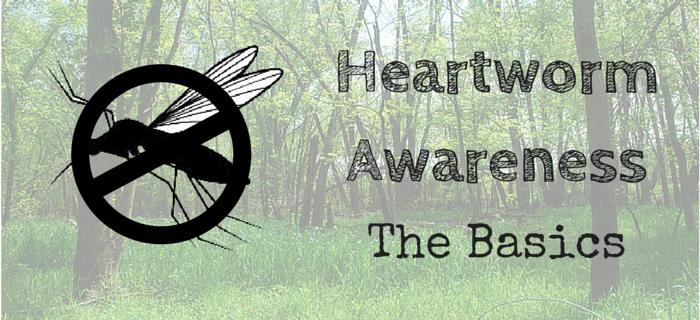 Pet Parents and Heartworm Disease: The Basics