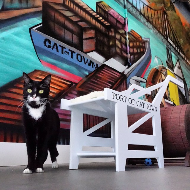 cat town cafe