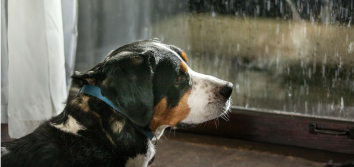 Helping Your Dog Cope with Noise Fear