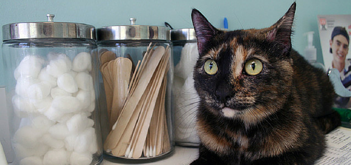 Fear Free™ Veterinary Visits For Your Cat Start at Home