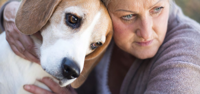 IVAPM Announces September is Animal Pain Awareness Month