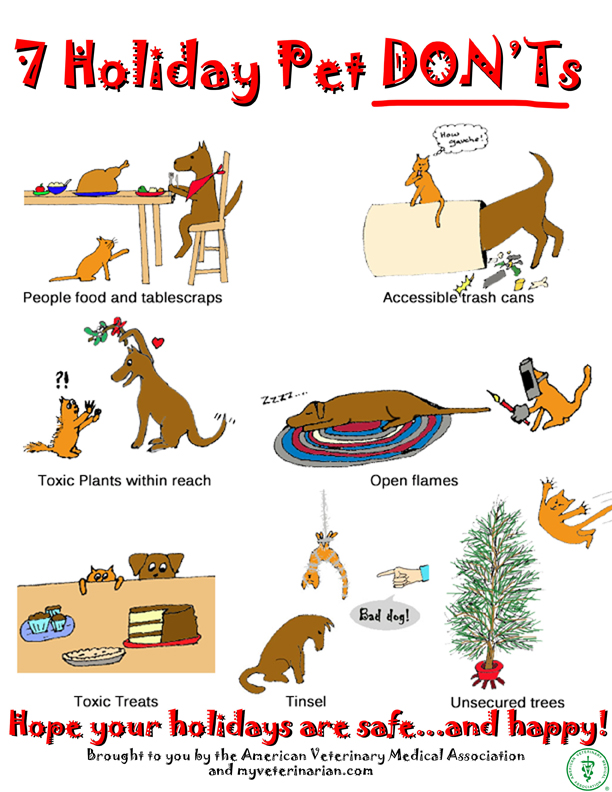 7 Holiday Pet Dont's