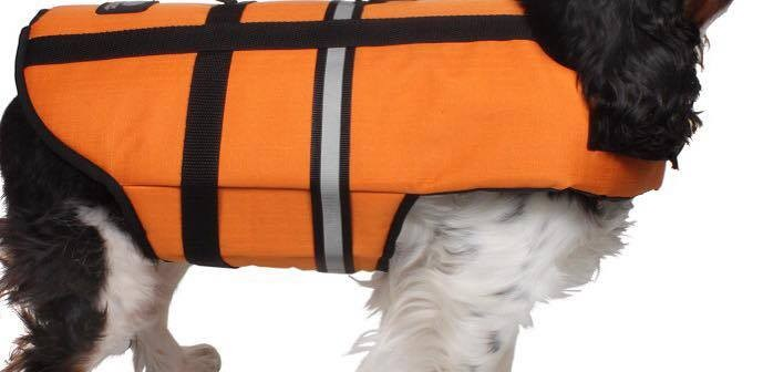 New Life Jacket for Dogs!