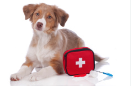Are You Prepared for Pet First Aid Awareness Month?