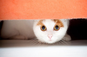 Photo Source: http://cdn.pet360.com/pet360/Content/Images/CMS/Cat_TrainingFearfulCat.jpg