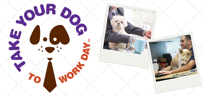 Preparing Your Pooch for Take Your Dog to Work Day