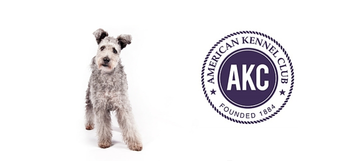 Pumi Joins the Pack as American Kennel Clubs 190th Breed