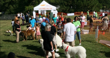akc responsible dog ownership day