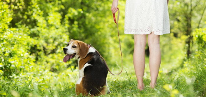 6 Ways To Prevent Your Pet From Getting Lost