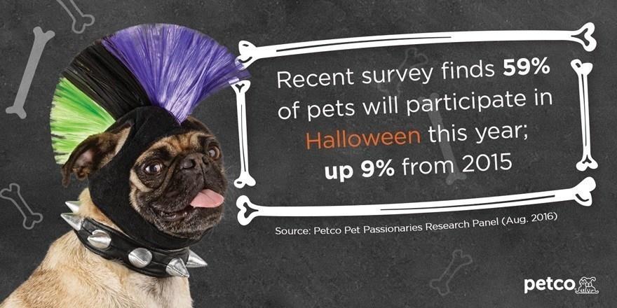 petco halloween survey