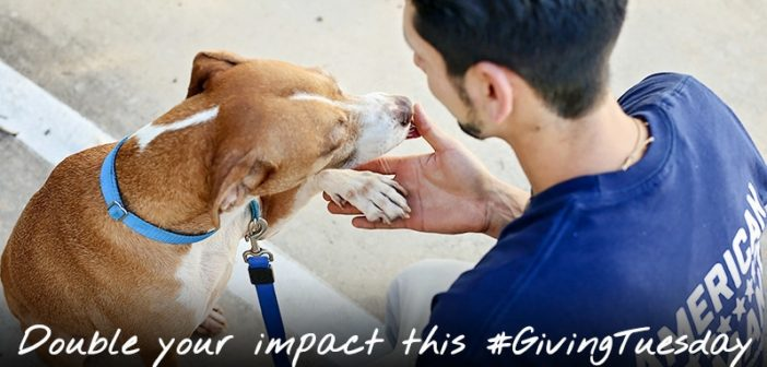 #GivingTuesday: Making a Brighter Holiday Season (and Coming Year) for Animals
