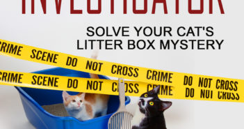 dusty rainbolt cat scene investigator