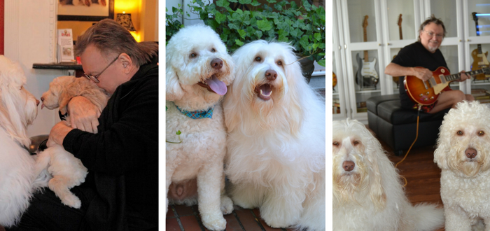 Goldendoodle Ollie Saves the Life of Noted Nashville Guitarist/Songwriter