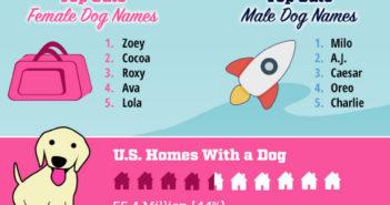 pet names 2016