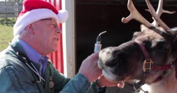 avma santa reindeer