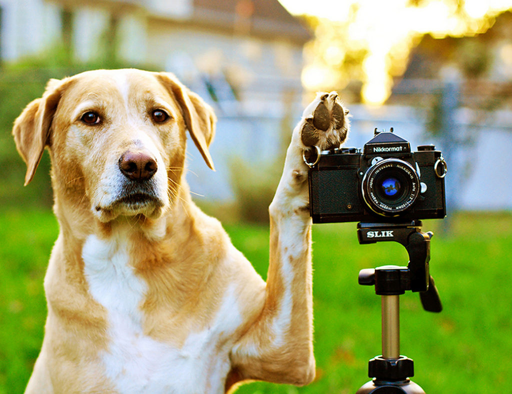 photographing and filming dogs