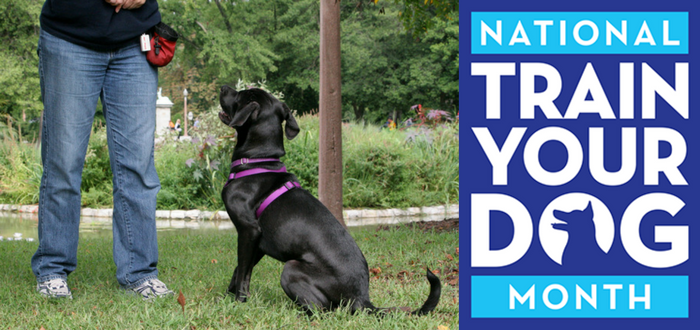January is the APDT's National Train Your Dog Month