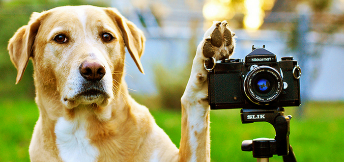Tips for Photographing and Filming Your Dog