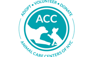 acc of nyc animal care center