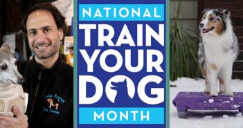 train your dog month dog training