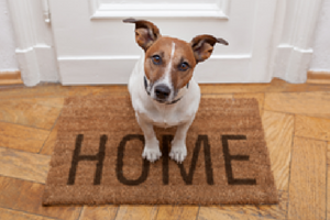 how many households own a pet int he U.S.