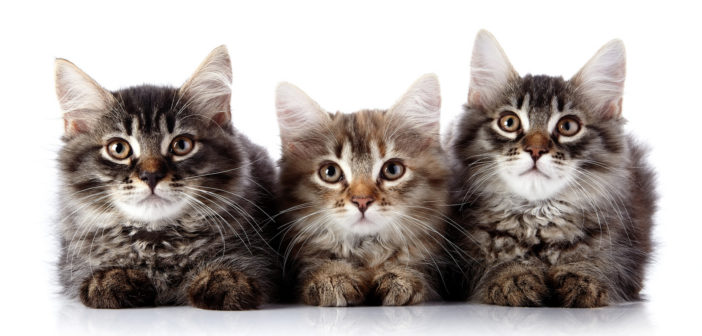 Ceva Expands Distribution Of Catego™ For Cats