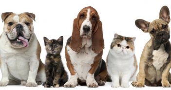 signs poison prevention dog cat