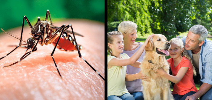 New Reports Show That Raising Heartworm Awareness Requires Year-round Effort, New Approaches