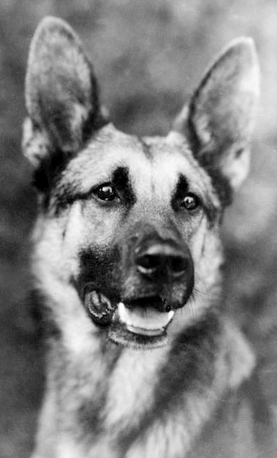 canine film star strongheart