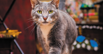 shop cats of new york cat writers association cwa