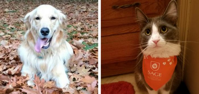 wackiest pet names