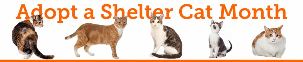adopt-a-shelter-cat month