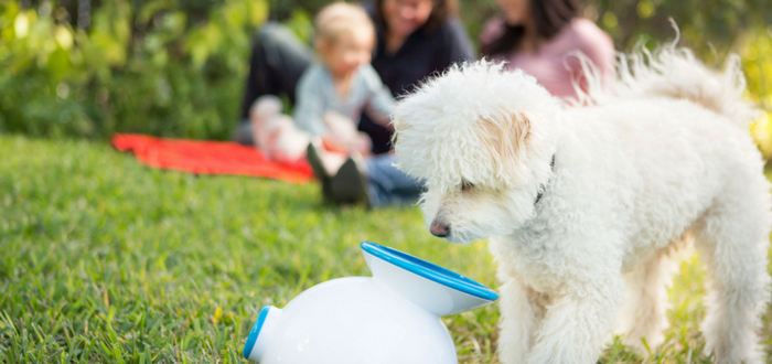 iFetch helps shelter dogs find a home through play