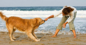 summer dog-friendly beaches
