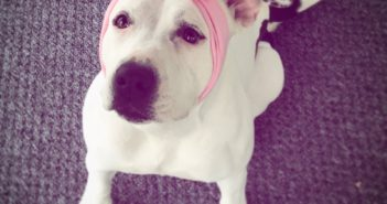 american humane hero dog awards abigail