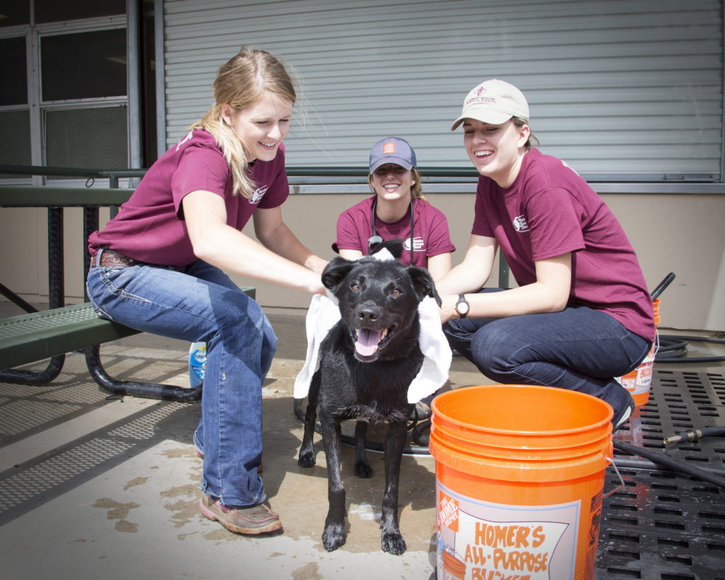 texas A&M veterinary emergency response team hurricane harvey